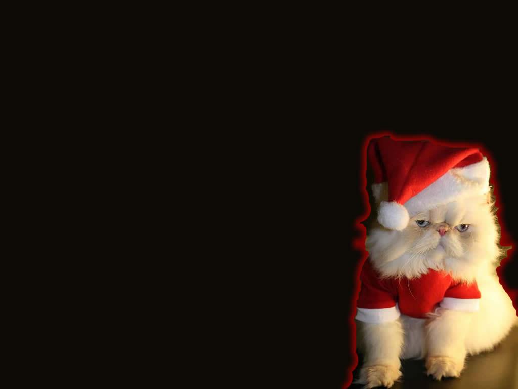 Sfondi Natalizi Originali.Bello Sfondo Natale Gattino