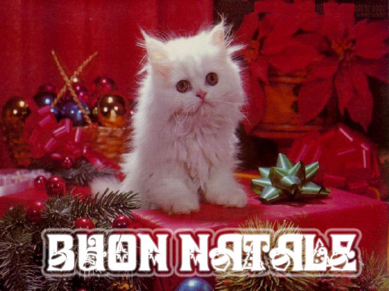 Sfondo Desktop Natale Gattino